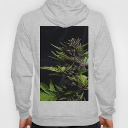 Purple Cannabis Plant Hoody