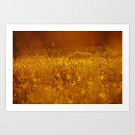 flower field at sunset Art Print
