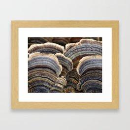 Fungus Framed Art Print
