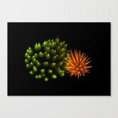 Efflorescence 29 Canvas Print
