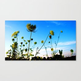 out back Canvas Print