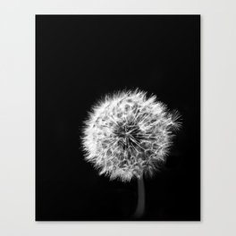 Black and White Dandelion Canvas Print