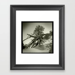 Tree at Tent Rocks Framed Art Print