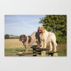 Italian Spinoni Dogs Woody & Ruben Canvas Print