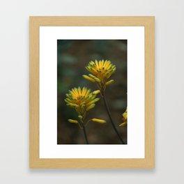 Yellow Blossoms Framed Art Print