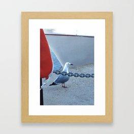 The Cape Town gull Framed Art Print