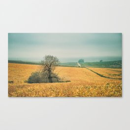 The field in autumn Canvas Print