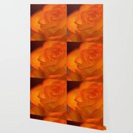 Fiery bright beautiful orange and yellow rose Wallpaper