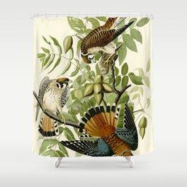 American Sparrow Hawk (Falco sparverius) Shower Curtain