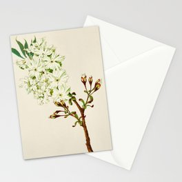Gyoi-ko or Robe Yellow Cherry Blossoms Stationery Cards