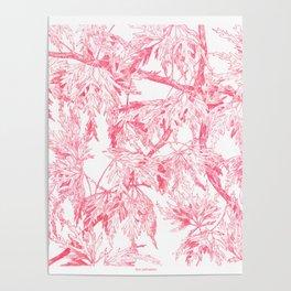 Acer palmatum Poster