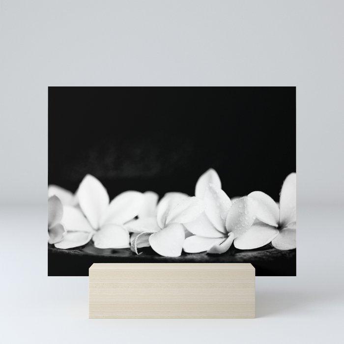 Singapore White Plumeria Flowers the Fragrance of Hawaii Mini Art Print by  sharonmau