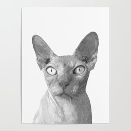 Black and White Sphynx Cat Poster