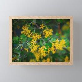 Yellow Blossoms 5 Framed Mini Art Print