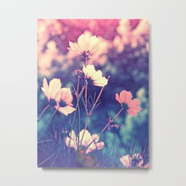Cosmea softly art of nature Metal Print