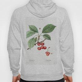 Cherry Cerasus from Traite des Arbres et Arbustes que lon cultive en France en pleine terre (1801-18 Hoody