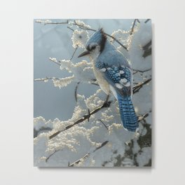 Blue Jay - On the Fence Metal Print