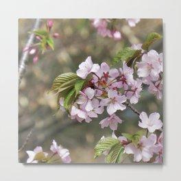 cherry blossom 01 Metal Print