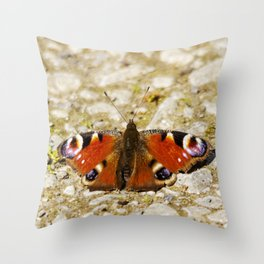 Peacock butterfly resting on a path Throw Pillow