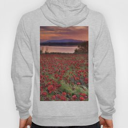 """Sea of poppies"". Sunset at the lake Hoody"