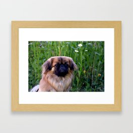 Lion Dog Framed Art Print