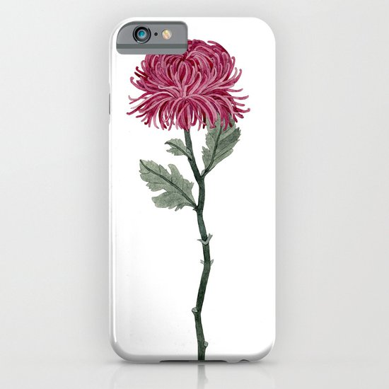 Pink Chrysanthemum iPhone & iPod Case