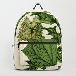 Datura stramonium (thorn apple - jimson weed or devil s snare) - Vintage botanical illustration Backpack