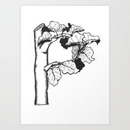 "Native Texas Plants ""P"" Art Print"