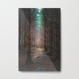 Mysterious spruce forest Metal Print