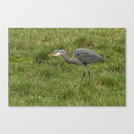 Swallowing the Catch Canvas Print