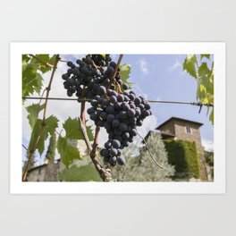 Between the Tuscan Grape Vines Art Print