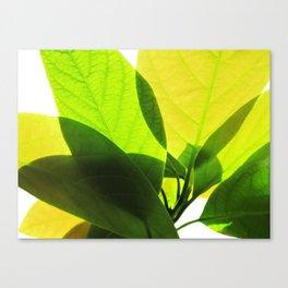 Avocado Leaves Canvas Print