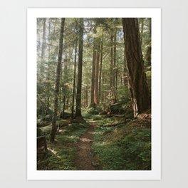 Wonderland Forest Trail Art Print