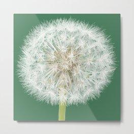 A Single Dandelion Metal Print