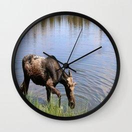 Young Moose Wall Clock