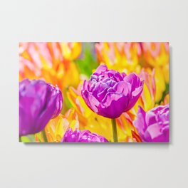 Tulips Enchanting 08 Metal Print
