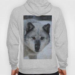Lone wolf roams the Canadian Rockies Hoody