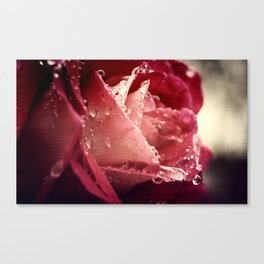 Watery Rose Canvas Print