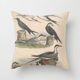 Lesser Tern Sooty Tern Black Tern Marsh Tern Great Tern Arctic Tern9 Throw Pillow