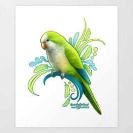 Green Quaker Parrot Art Print