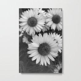 Black and White Echinacea Metal Print