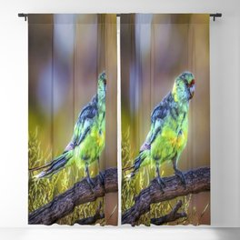 Mallee Ringneck Parrot Blackout Curtain
