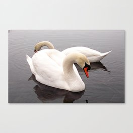 White beauty Canvas Print