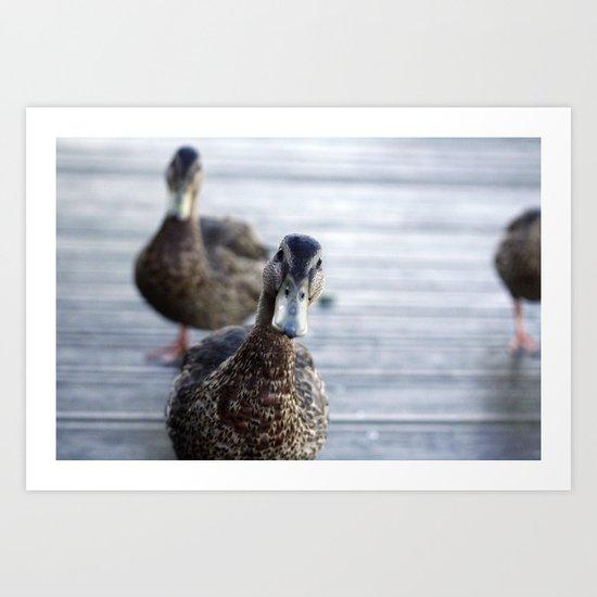 Curious duck Art Print