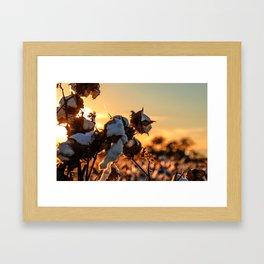 Cotton Field 12 Framed Art Print