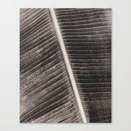 Banana leaf close up / Nature photography art print - plant hortus   Canvas Print