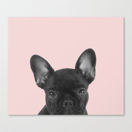 Blush pink Frenchie pop Canvas Print