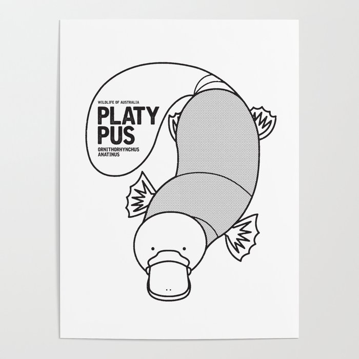Platypus, Wildlife of Australia Poster