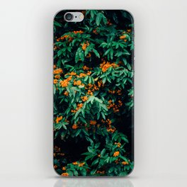 in bloom. iPhone Skin