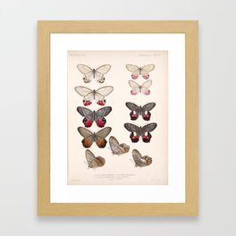 Moths And Butterfly Vintage Scientific Hand Drawn Insect Anatomy Biological Illustration Framed Art Print